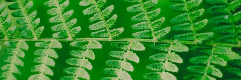 Podcast pover art closeup photography of green leaf plant